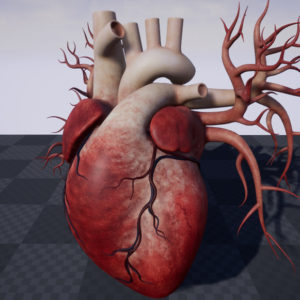 human-heart-3d-model-19
