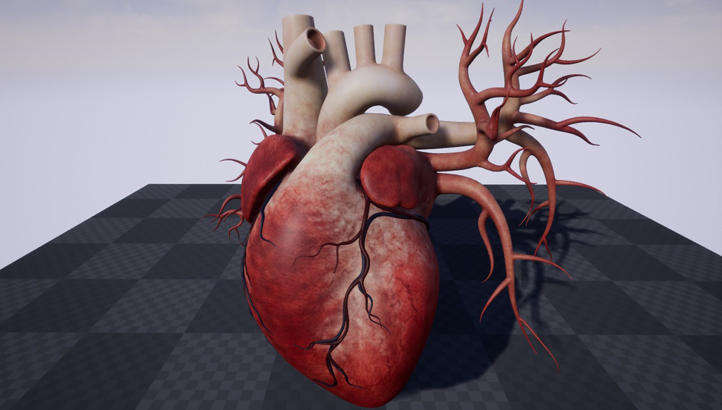 Human Heart 3D Model - Realtime - 3D Models World