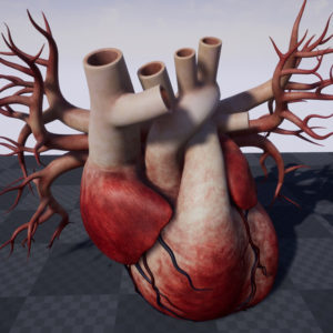 human-heart-3d-model-22