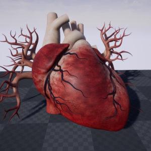 human-heart-3d-model-23