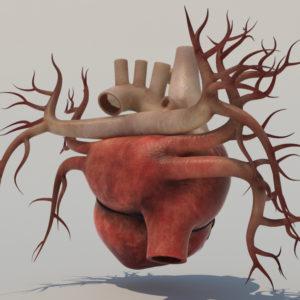 human-heart-3d-model-3