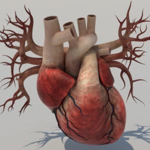 human-heart-3d-model-5