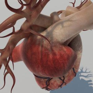 human-heart-3d-model-9