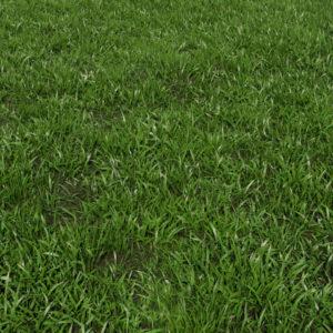low-poly-grass-3d-model-maya-xgen-1