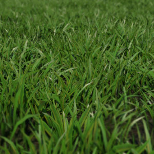 low-poly-grass-3d-model-maya-xgen-4
