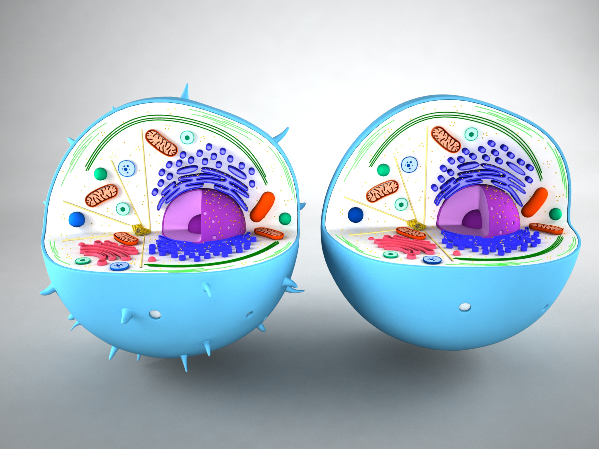 animal-cell-cross-section-3d-model-1