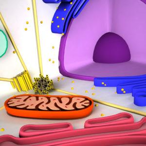 animal-cell-cross-section-3d-model-10