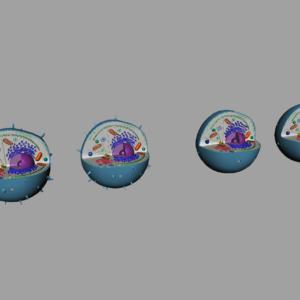 animal-cell-cross-section-3d-model-12