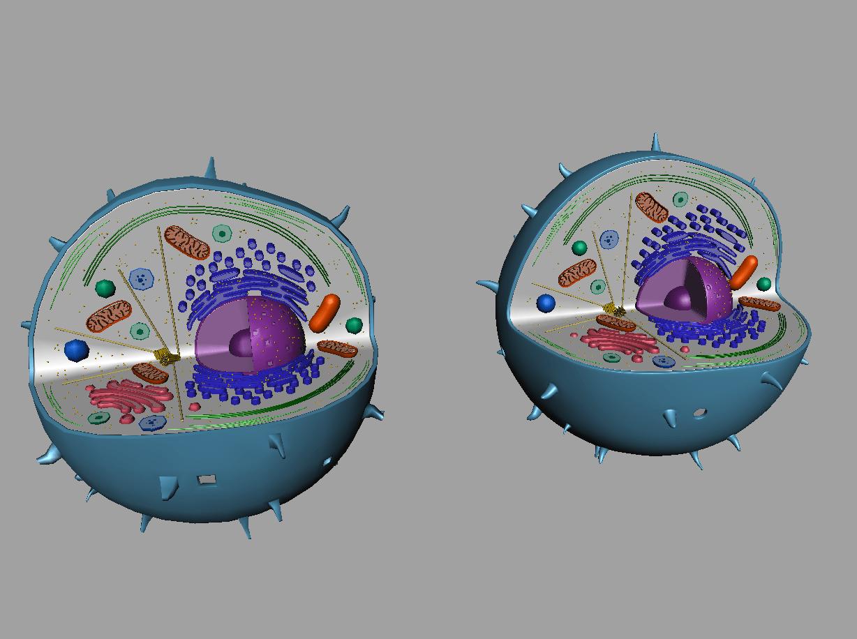 Animal Cell 3D Model - 3D Models World