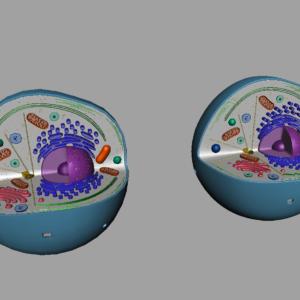 animal-cell-cross-section-3d-model-16