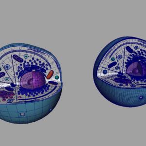 animal-cell-cross-section-3d-model-17
