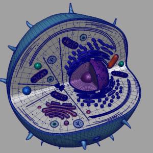 animal-cell-cross-section-3d-model-19
