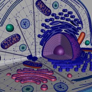 animal-cell-cross-section-3d-model-21