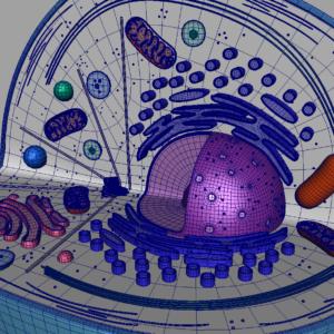 animal-cell-cross-section-3d-model-23