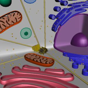 animal-cell-cross-section-3d-model-24