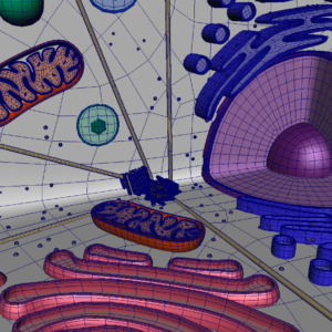 animal-cell-cross-section-3d-model-25