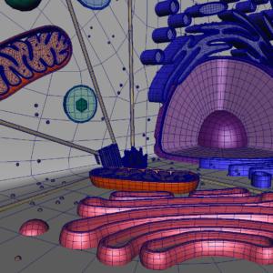 animal-cell-cross-section-3d-model-27