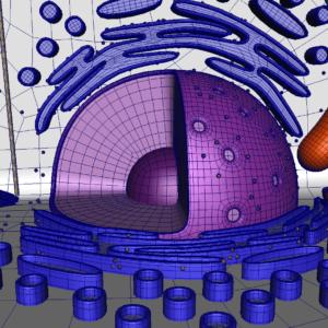 animal-cell-cross-section-3d-model-29