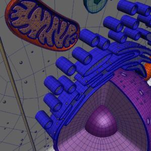 animal-cell-cross-section-3d-model-31