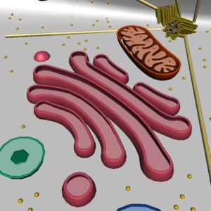 animal-cell-cross-section-3d-model-32