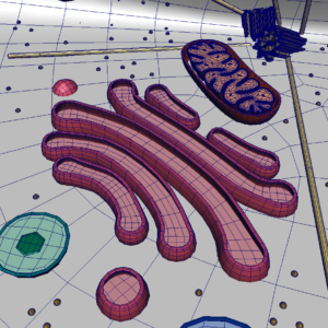 animal-cell-cross-section-3d-model-33