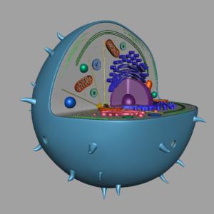 animal-cell-cross-section-3d-model-41