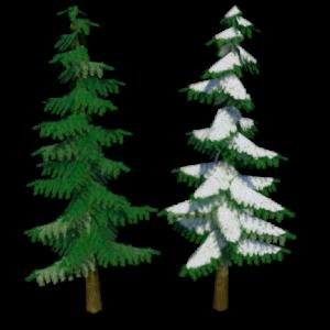 confir-trees-render