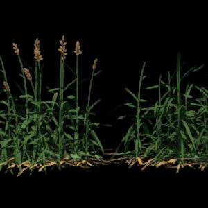 grass-render