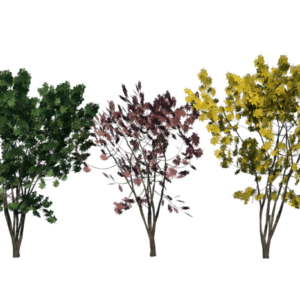 keyaki-trees-render