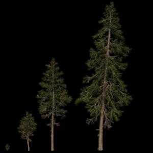pine-trees-render