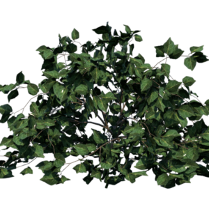 shrub-render