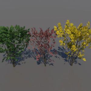 keyaki-trees-3d-models-1
