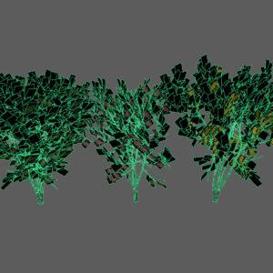 keyaki-trees-3d-models-3