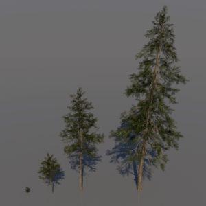 pine-trees-3d-models-1
