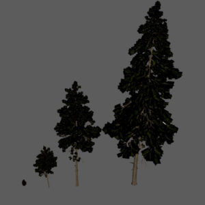 pine-trees-3d-models-2