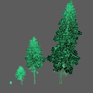 pine-trees-3d-models-3