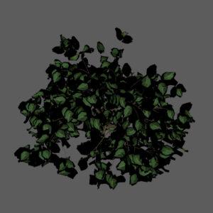 shrub-3d-model-2
