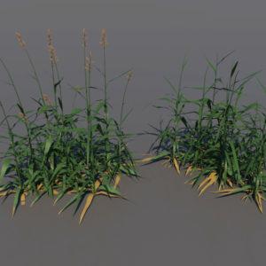 tall-grass-3d-model-1