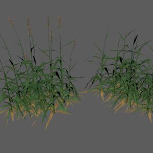 tall-grass-3d-model-2
